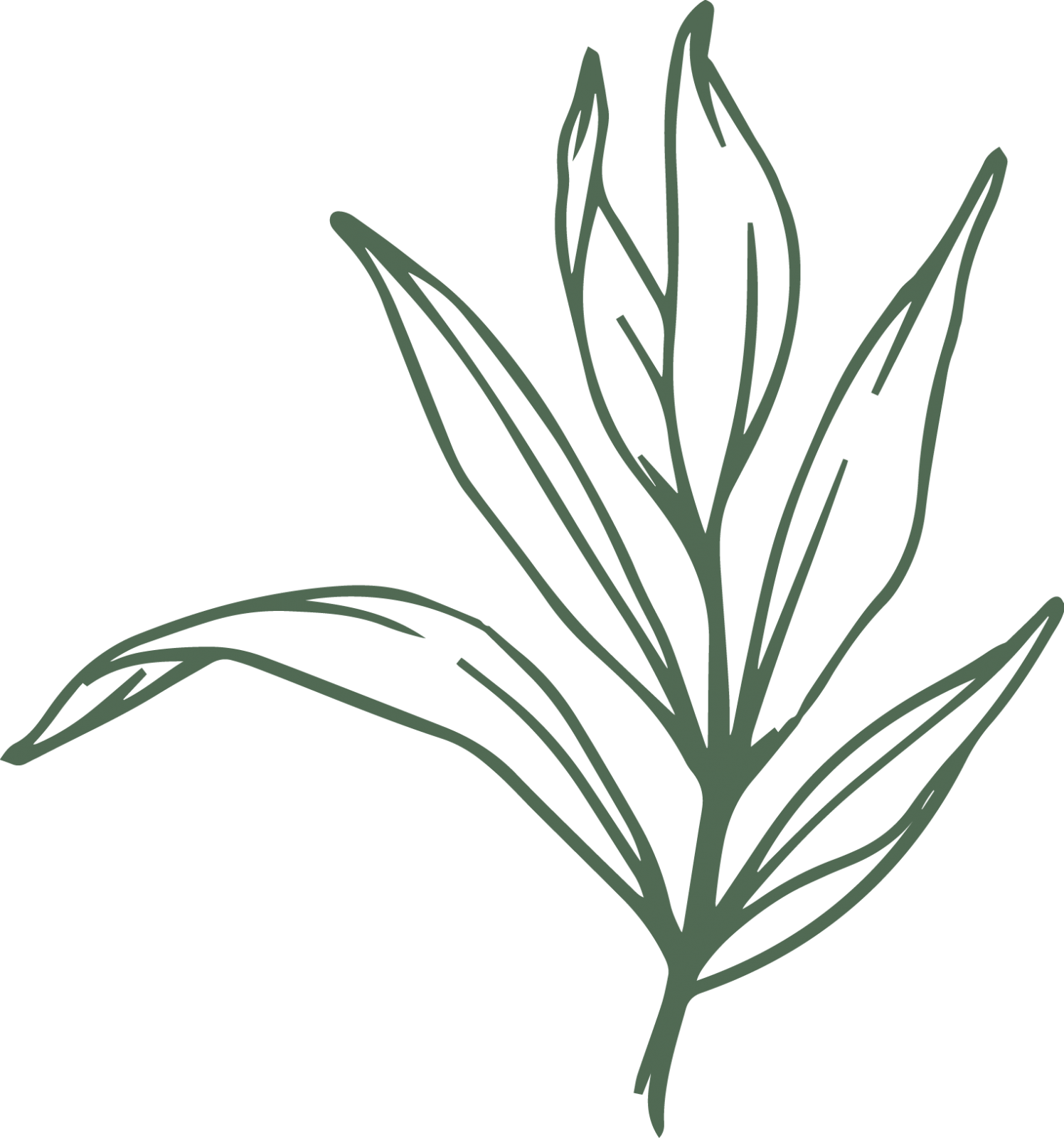 logocreation_cxbotanics_projectaconsulting